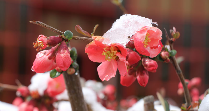 Flowers in Winter