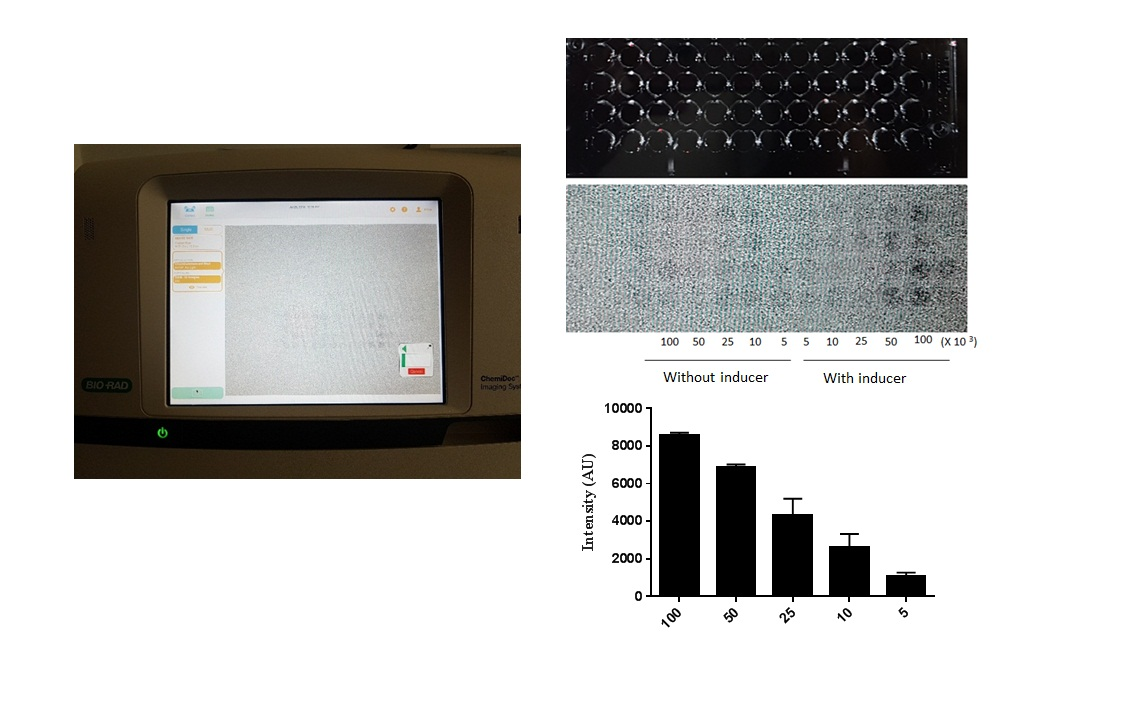 Invention of a dual purpose biosensor for gene therapy and live cell imaging at IASBS